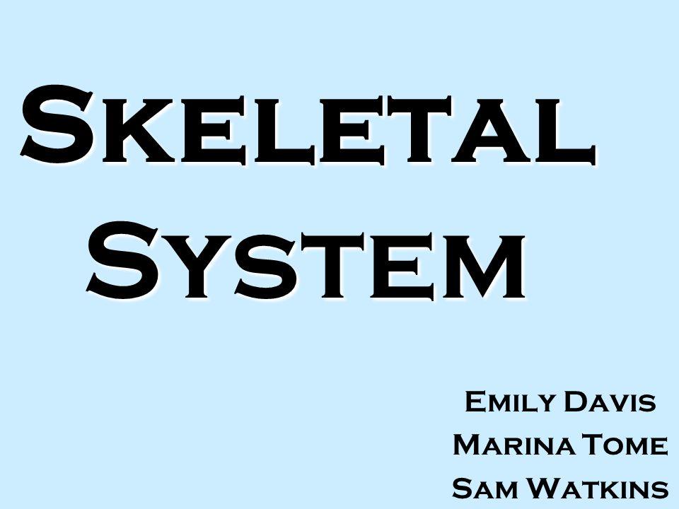 Skeletal System Emily Davis Marina Tome Sam Watkins