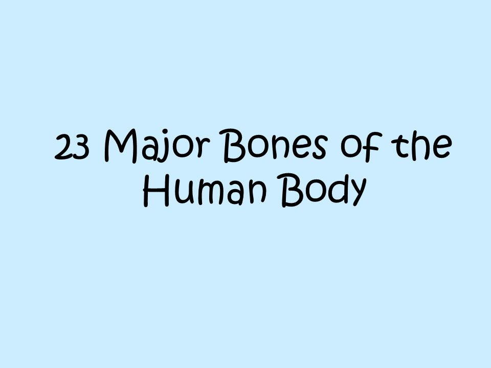 23 Major Bones of the Human Body