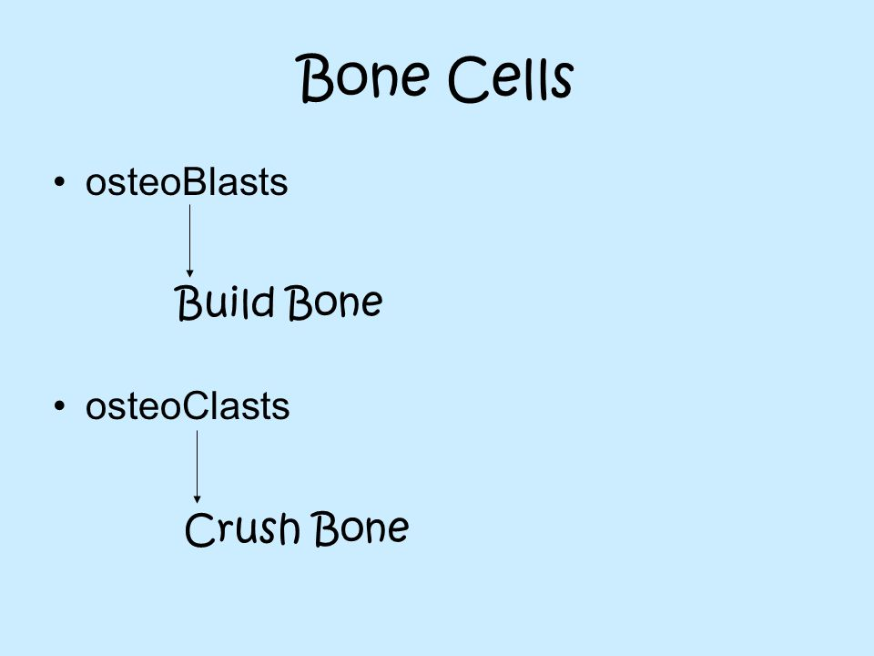 Bone Cells osteoBlasts osteoClasts Build Bone Crush Bone