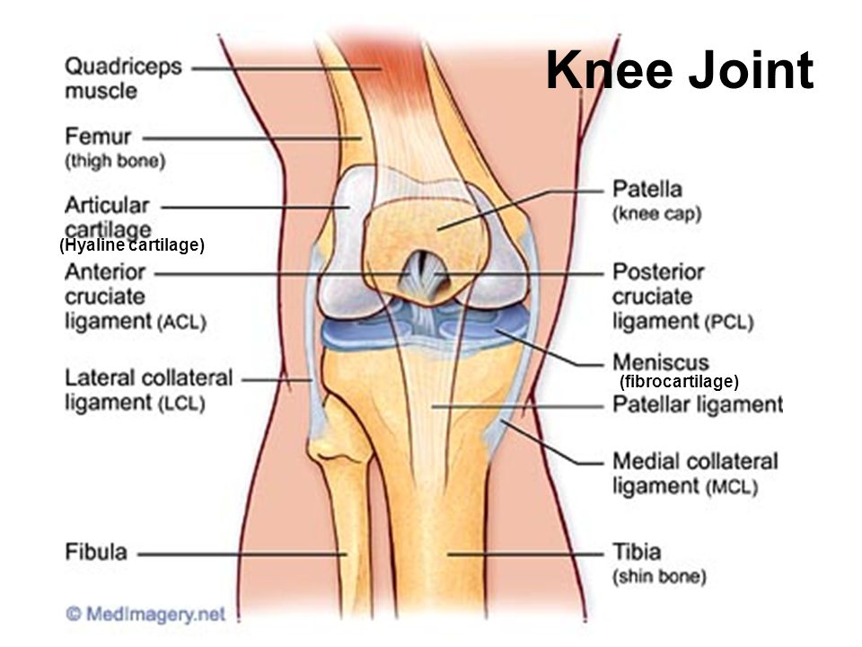 Ankle Joint Anterior interior tibiofibular ligament Achilles tendon (cut)