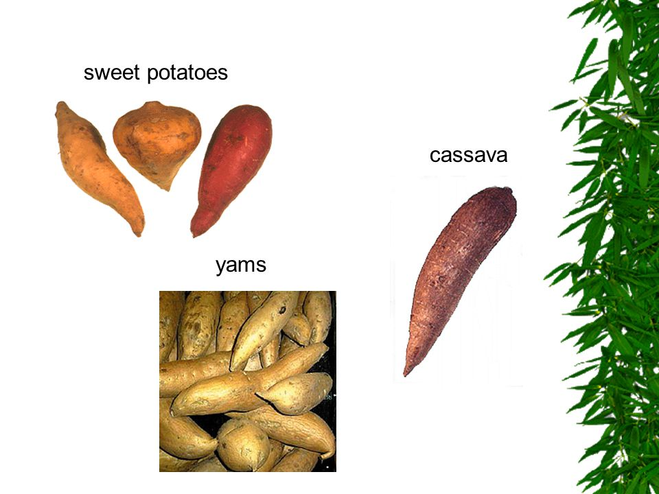 yams sweet potatoes cassava