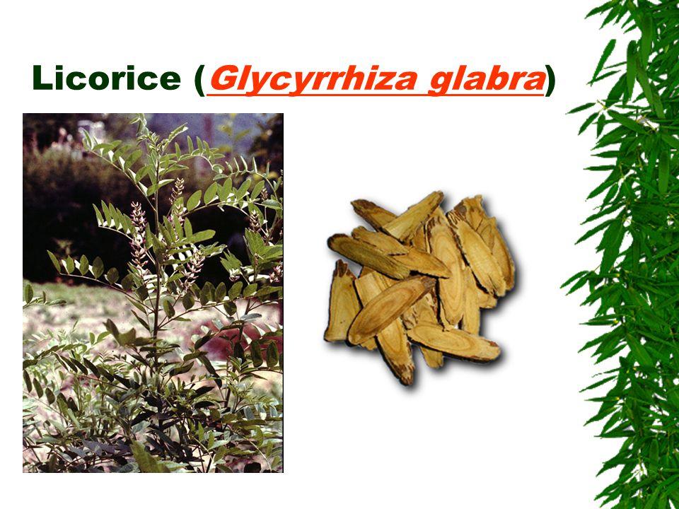 Licorice (Glycyrrhiza glabra)Glycyrrhiza glabra