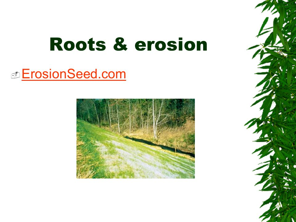 Roots & erosion  ErosionSeed.com ErosionSeed.com