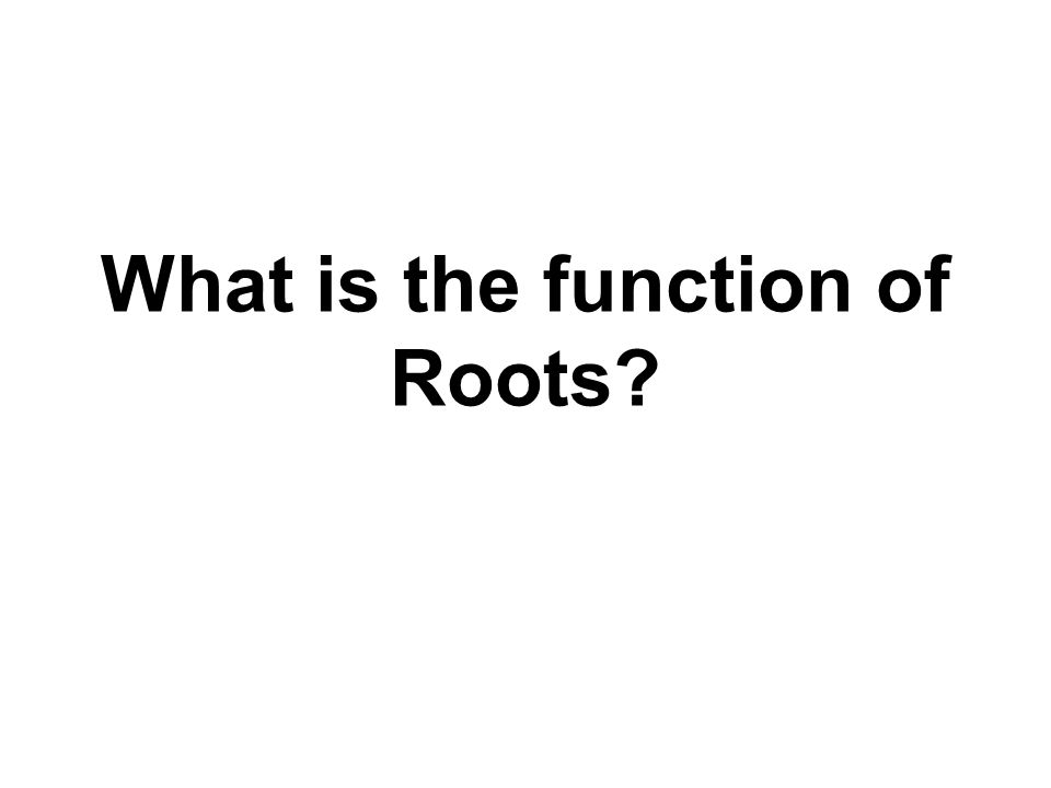What is the function of Roots?