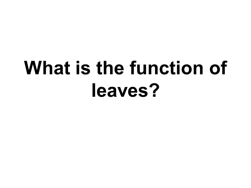 What is the function of leaves?
