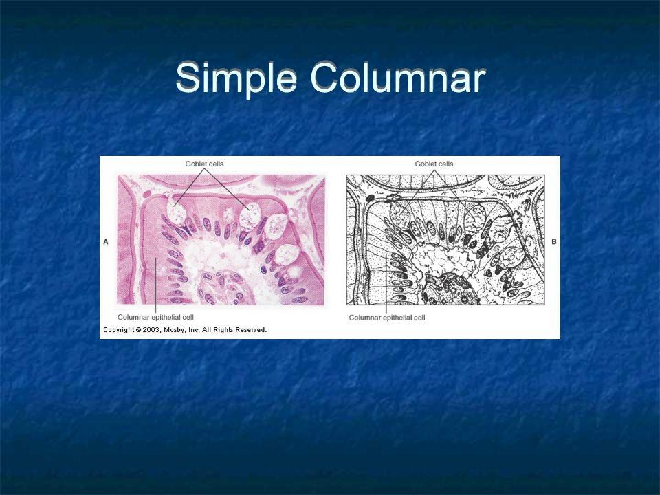 Simple Columnar