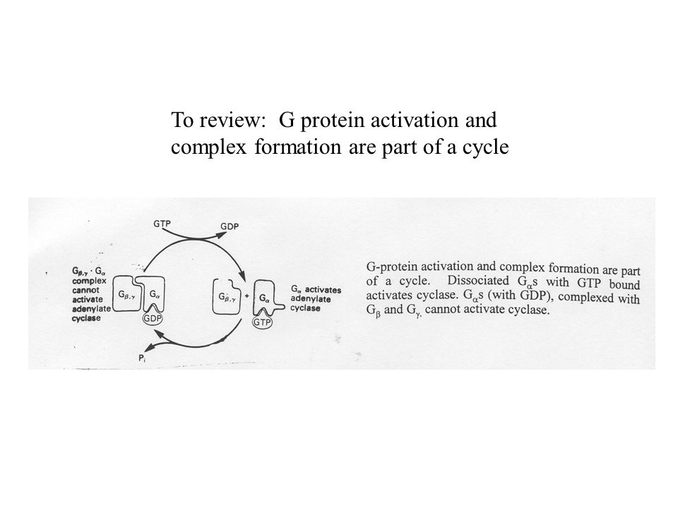 To review: G protein activation and complex formation are part of a cycle