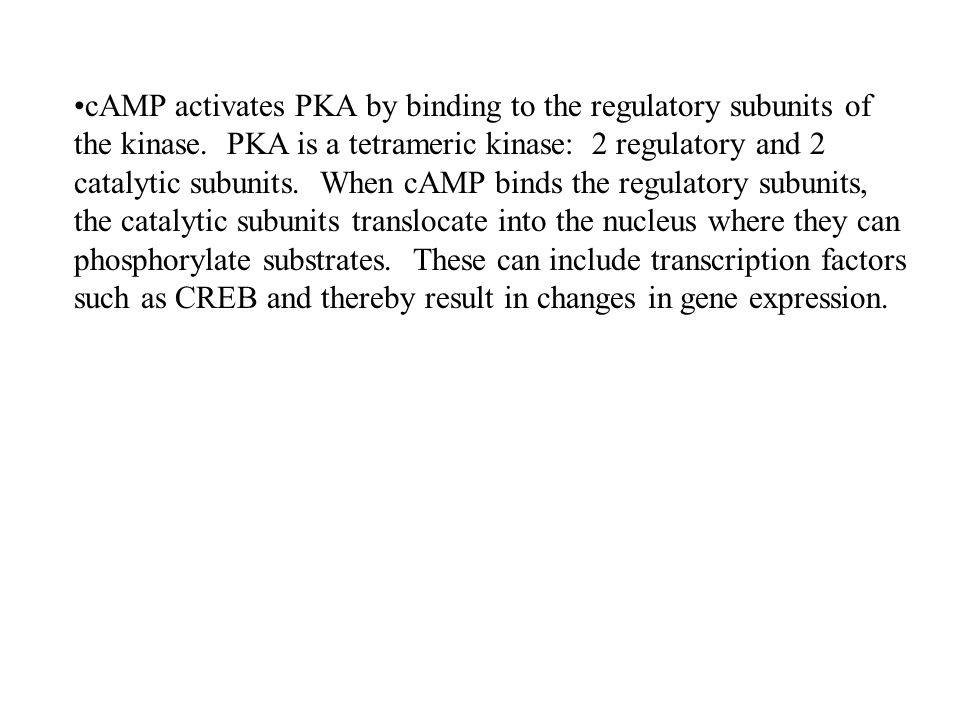 cAMP activates PKA by binding to the regulatory subunits of the kinase. PKA is a tetrameric kinase: 2 regulatory and 2 catalytic subunits. When cAMP b