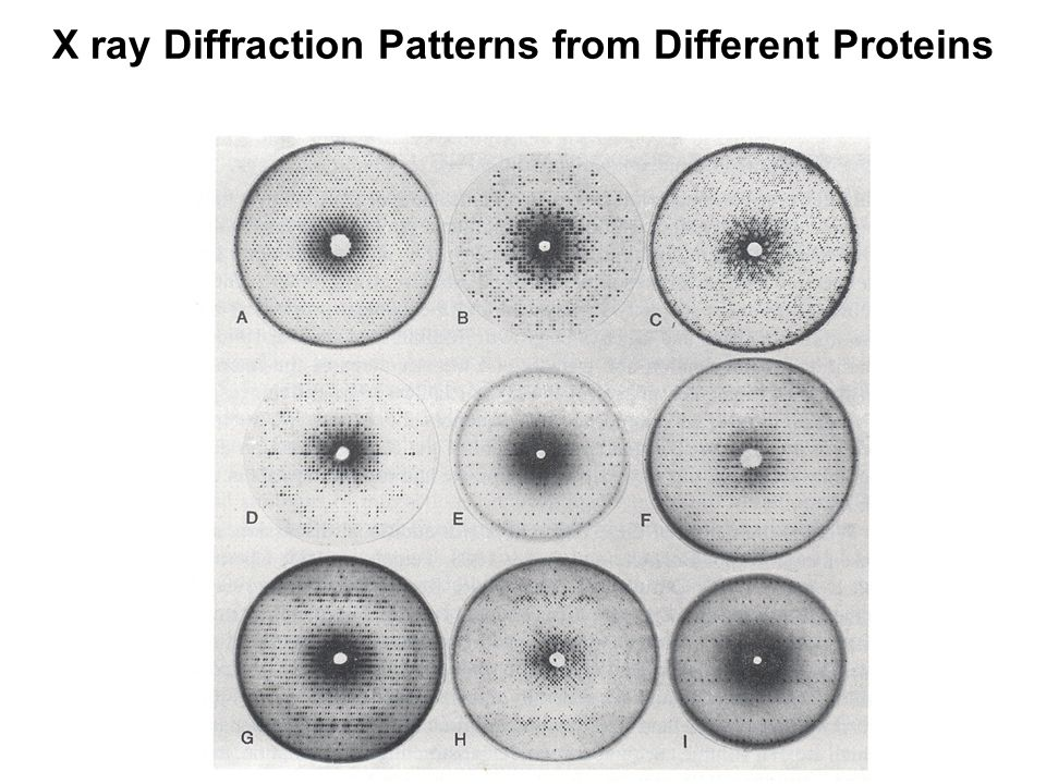 X ray Diffraction Patterns from Different Proteins