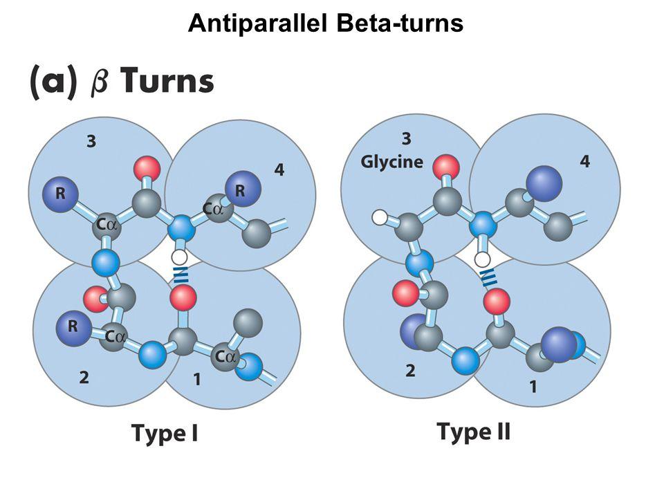 Antiparallel Beta-turns