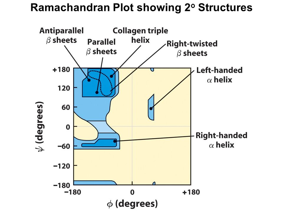 Ramachandran Plot showing 2 o Structures