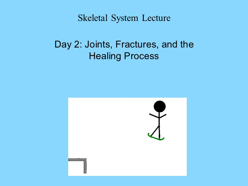 Skeletal System Lecture Day 2: Joints, Fractures, and the Healing Process