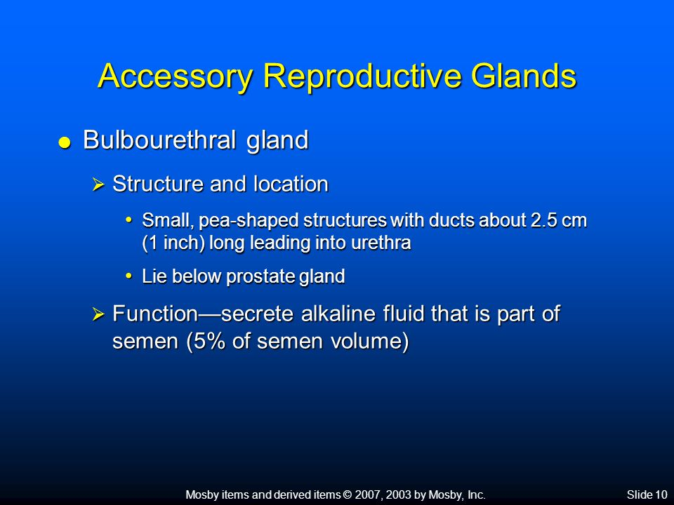 Mosby items and derived items © 2007, 2003 by Mosby, Inc.Slide 10 Accessory Reproductive Glands  Bulbourethral gland  Structure and location Small,