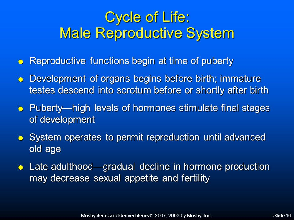 Mosby items and derived items © 2007, 2003 by Mosby, Inc.Slide 16 Cycle of Life: Male Reproductive System  Reproductive functions begin at time of pu