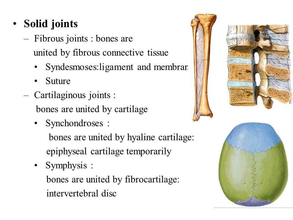 Solid joints –Fibrous joints : bones are united by fibrous connective tissue Syndesmoses:ligament and membrane Suture –Cartilaginous joints : bones ar