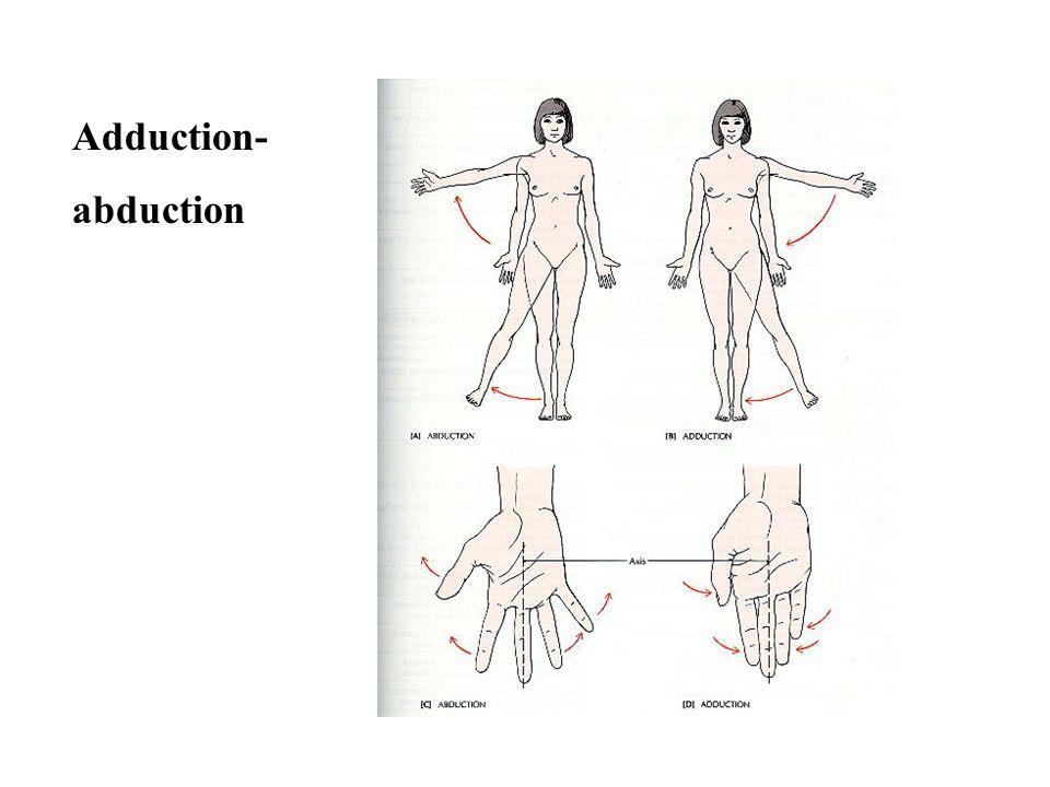 Rotation Circumduction supinationpronation