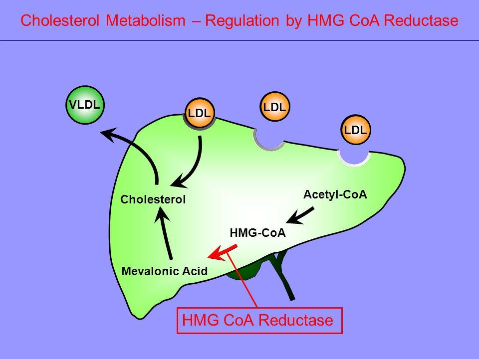 Acetyl-CoA HMG-CoA Mevalonic Acid Cholesterol VLDL LDL Cholesterol Metabolism – Regulation by HMG CoA Reductase HMG CoA Reductase