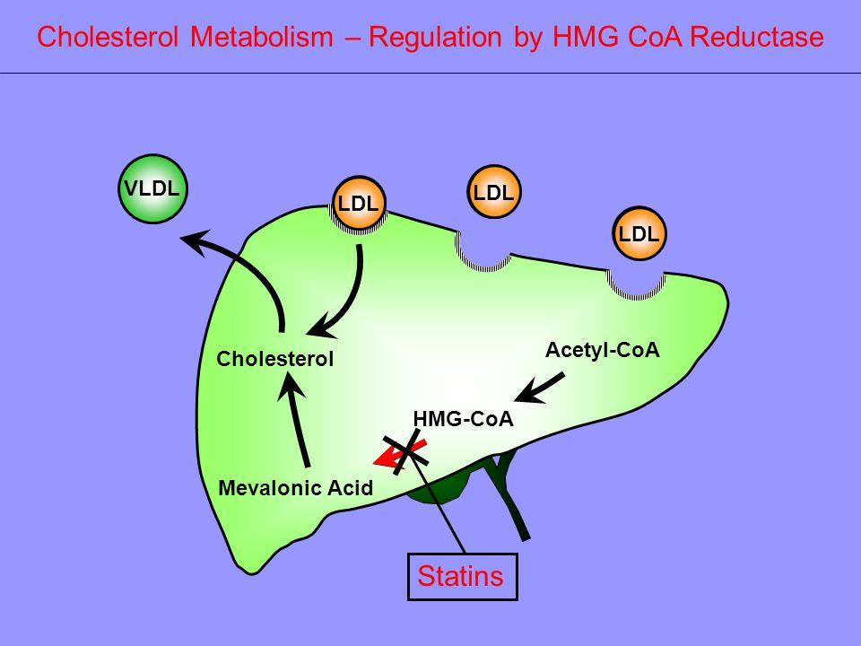 Acetyl-CoA HMG-CoA Mevalonic Acid Cholesterol VLDL LDL Cholesterol Metabolism – Regulation by HMG CoA Reductase Statins