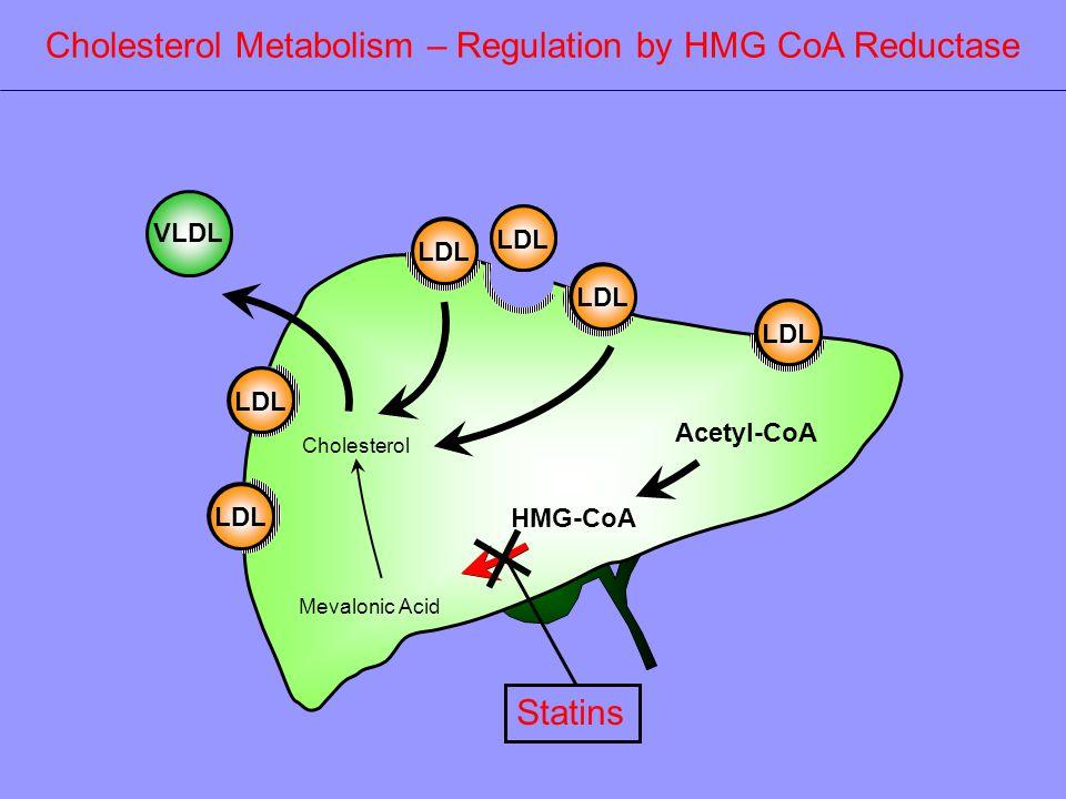 LDL Acetyl-CoA HMG-CoA Mevalonic Acid VLDL LDL Cholesterol Metabolism – Regulation by HMG CoA Reductase Statins Cholesterol LDL