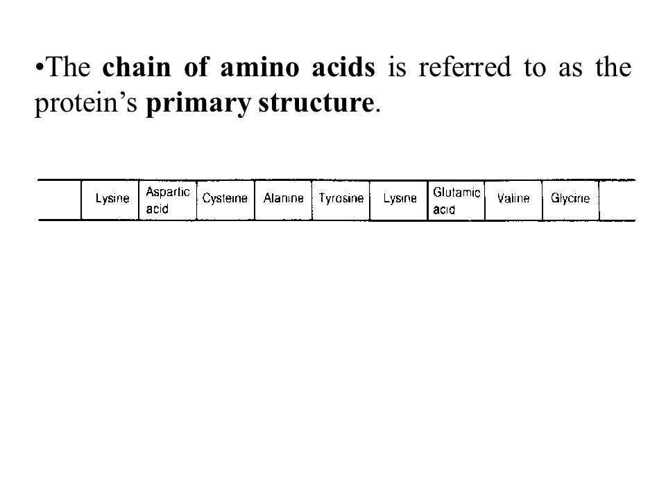 The chain of amino acids is referred to as the protein's primary structure.