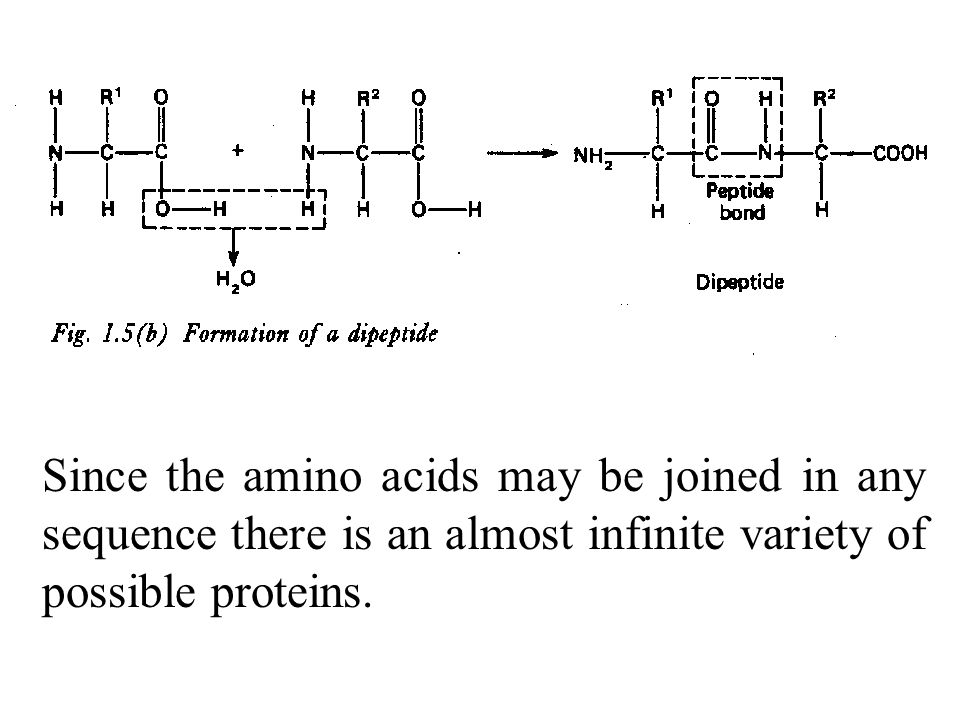 Since the amino acids may be joined in any sequence there is an almost infinite variety of possible proteins.