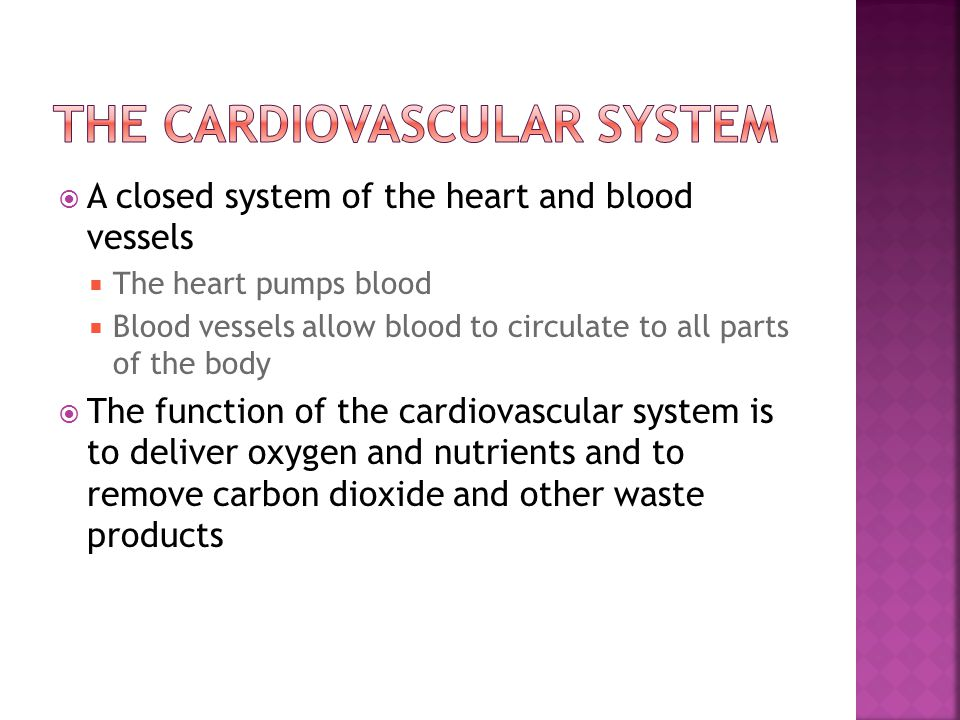  A closed system of the heart and blood vessels  The heart pumps blood  Blood vessels allow blood to circulate to all parts of the body  The funct