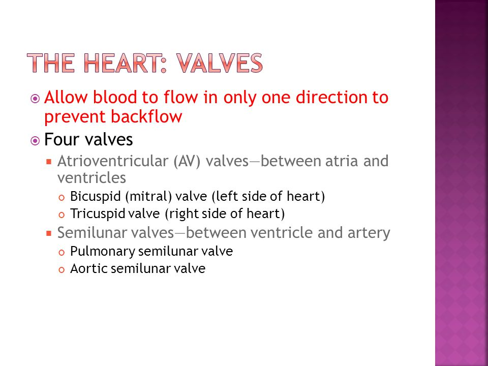  Allow blood to flow in only one direction to prevent backflow  Four valves  Atrioventricular (AV) valves—between atria and ventricles Bicuspid (mi