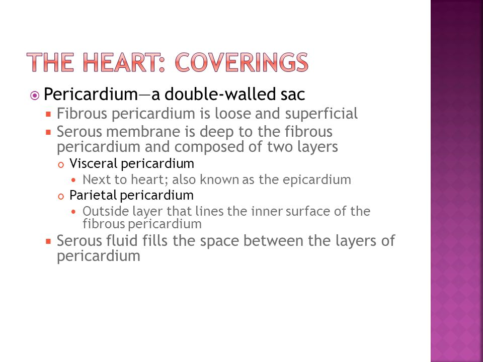  Pericardium—a double-walled sac  Fibrous pericardium is loose and superficial  Serous membrane is deep to the fibrous pericardium and composed of