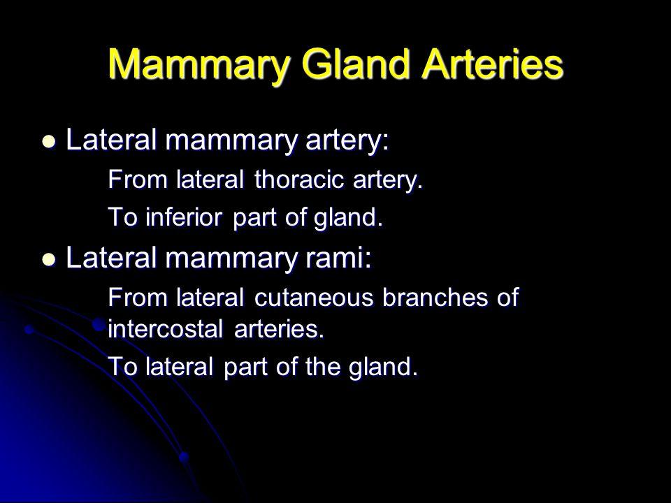 Mammary Gland Arteries Lateral mammary artery: Lateral mammary artery: From lateral thoracic artery. To inferior part of gland. Lateral mammary rami:
