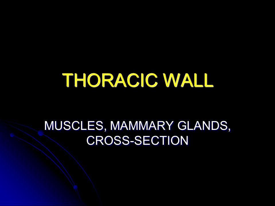 THORACIC WALL MUSCLES, MAMMARY GLANDS, CROSS-SECTION