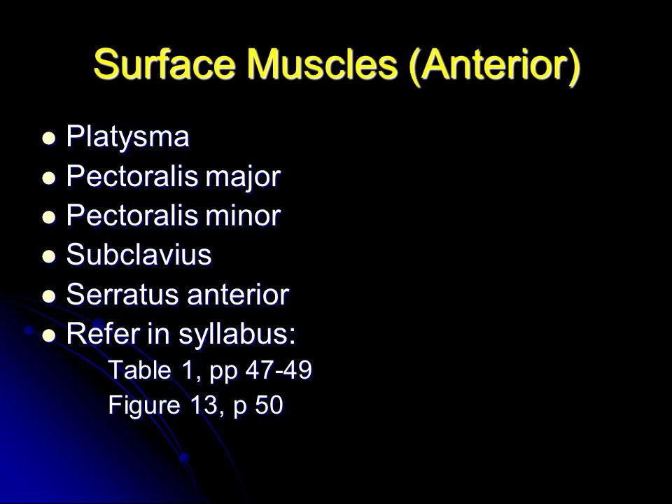 Surface Muscles (Anterior) Platysma Platysma Pectoralis major Pectoralis major Pectoralis minor Pectoralis minor Subclavius Subclavius Serratus anteri