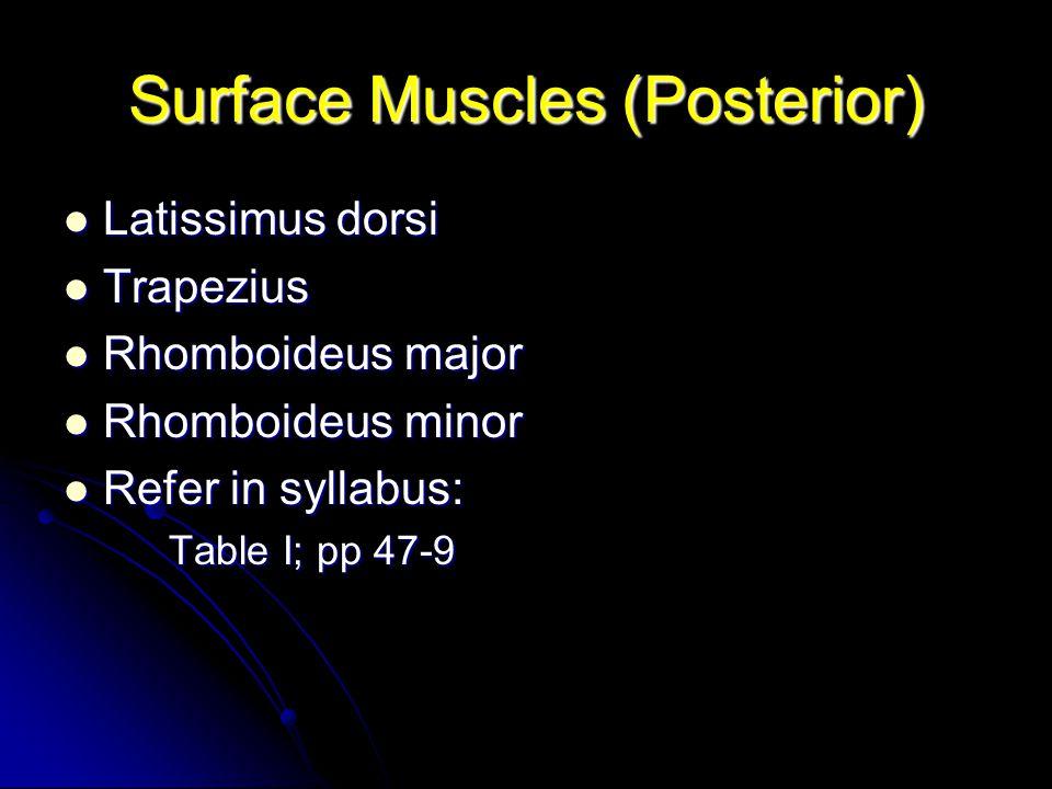 Surface Muscles (Posterior) Latissimus dorsi Latissimus dorsi Trapezius Trapezius Rhomboideus major Rhomboideus major Rhomboideus minor Rhomboideus mi