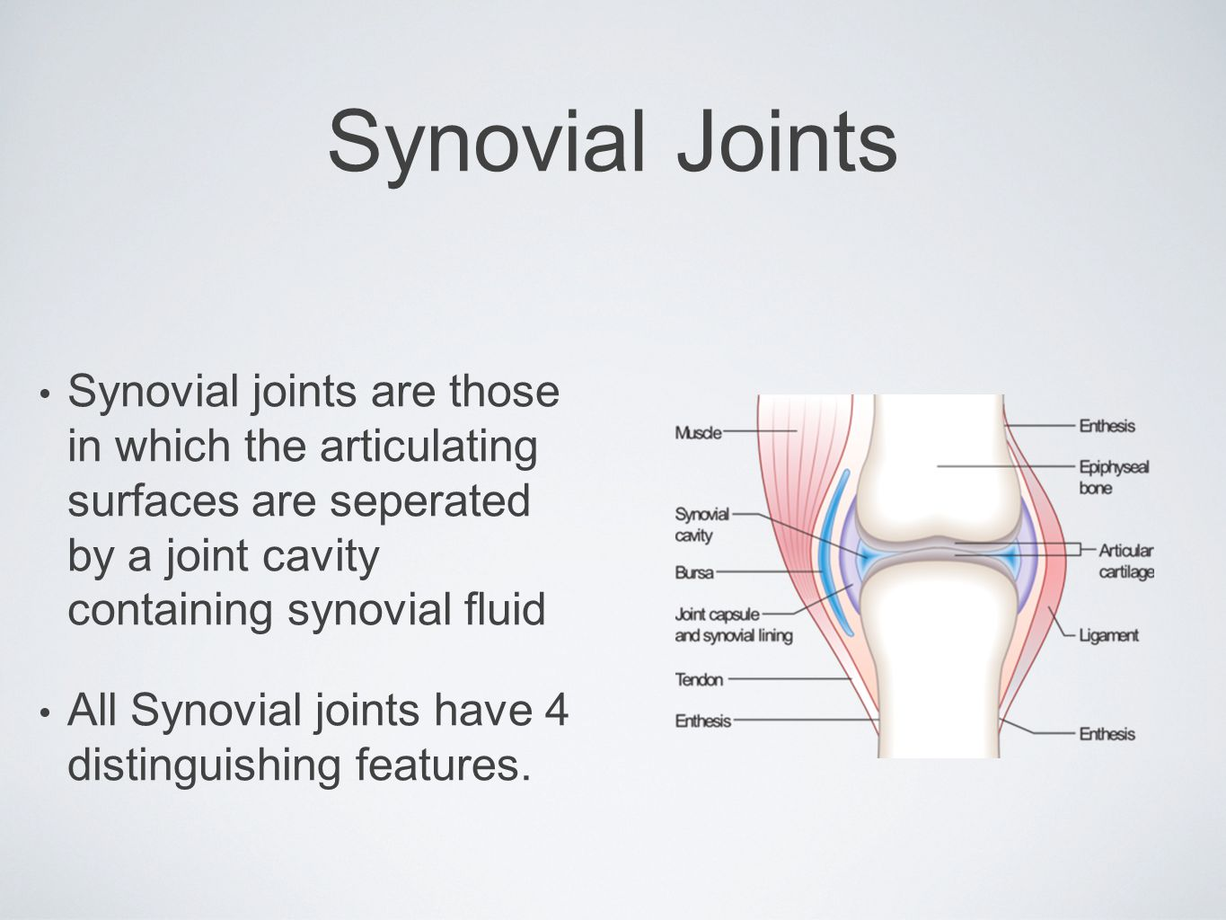 Synovial Joints Synovial joints are those in which the articulating surfaces are seperated by a joint cavity containing synovial fluid All Synovial jo