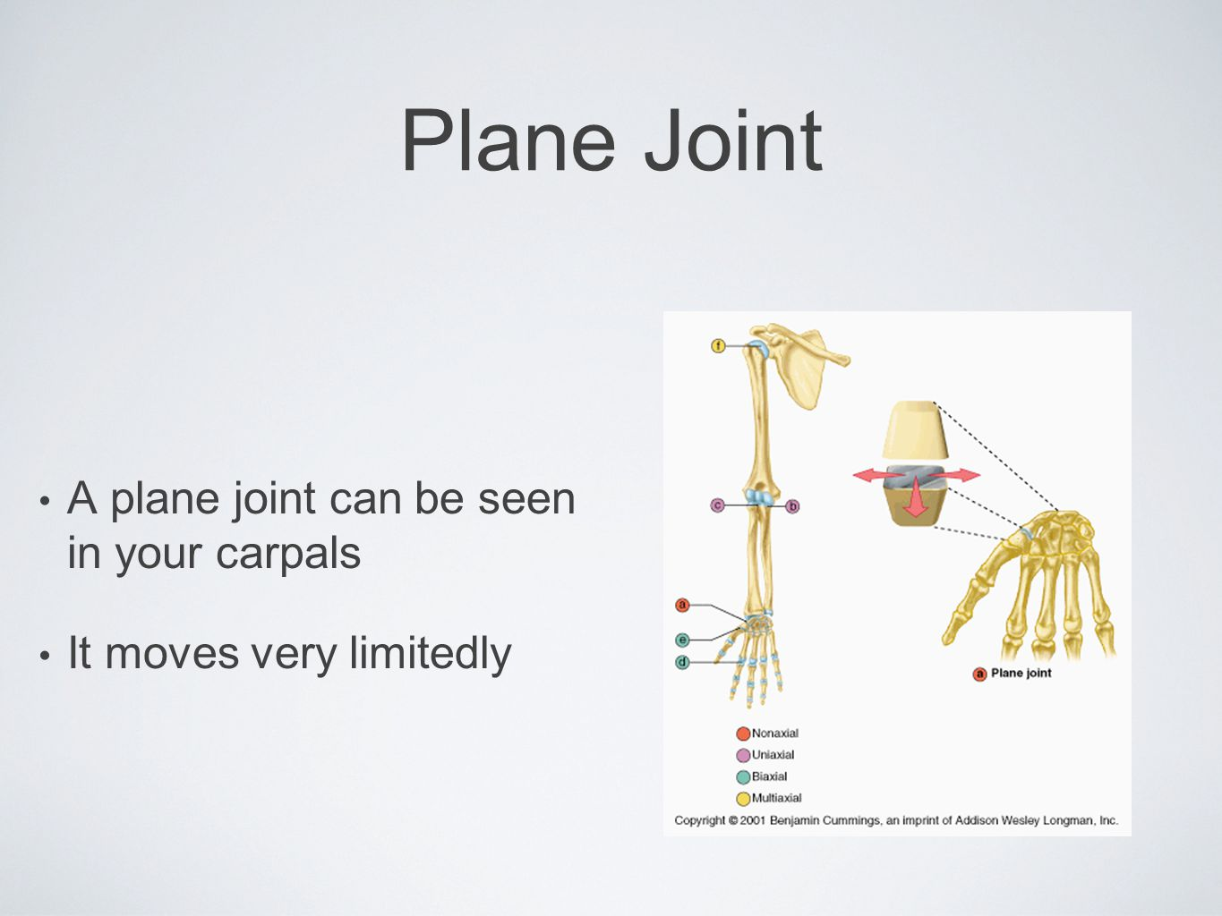 Plane Joint A plane joint can be seen in your carpals It moves very limitedly