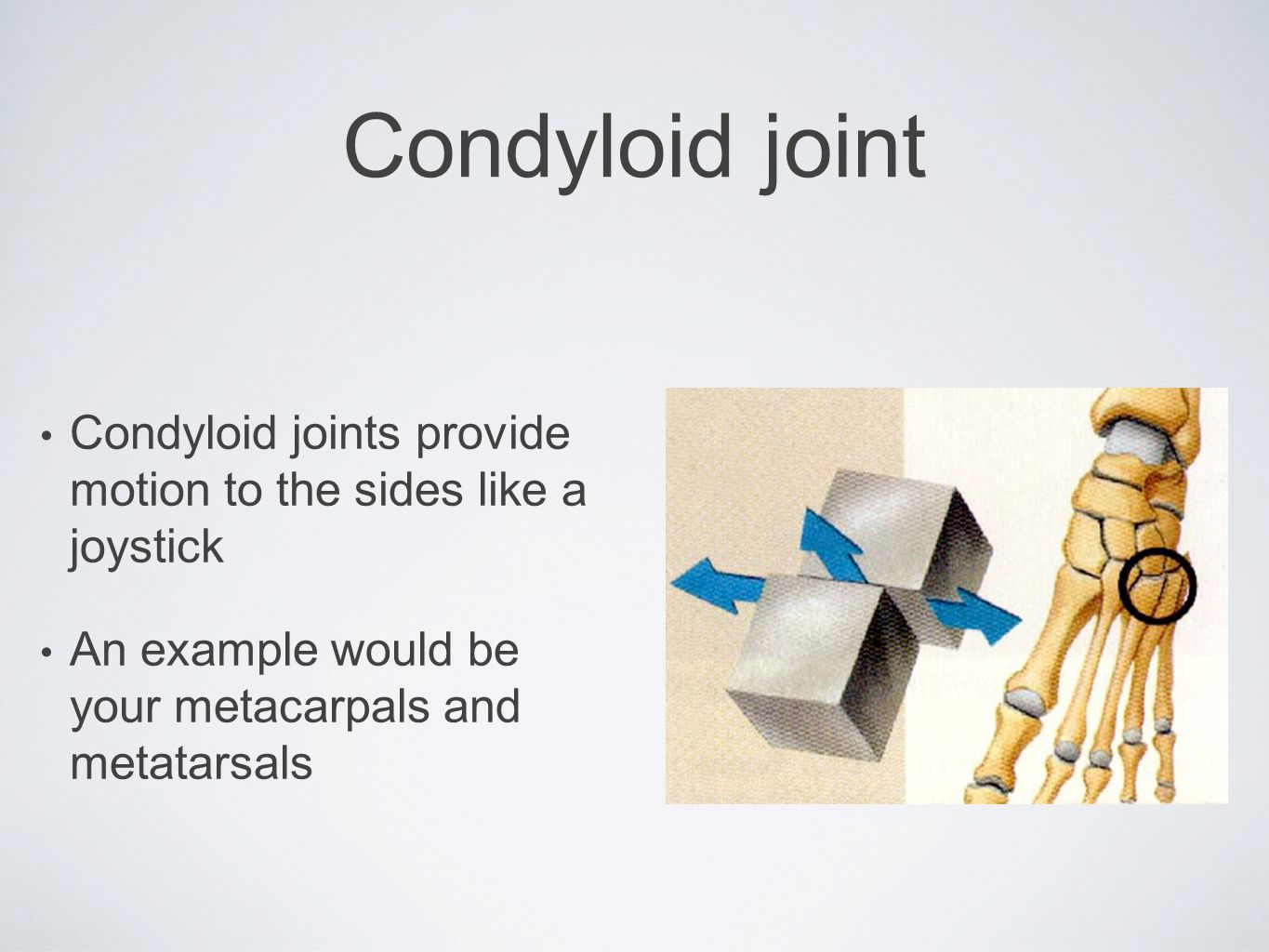 Condyloid joint Condyloid joints provide motion to the sides like a joystick An example would be your metacarpals and metatarsals