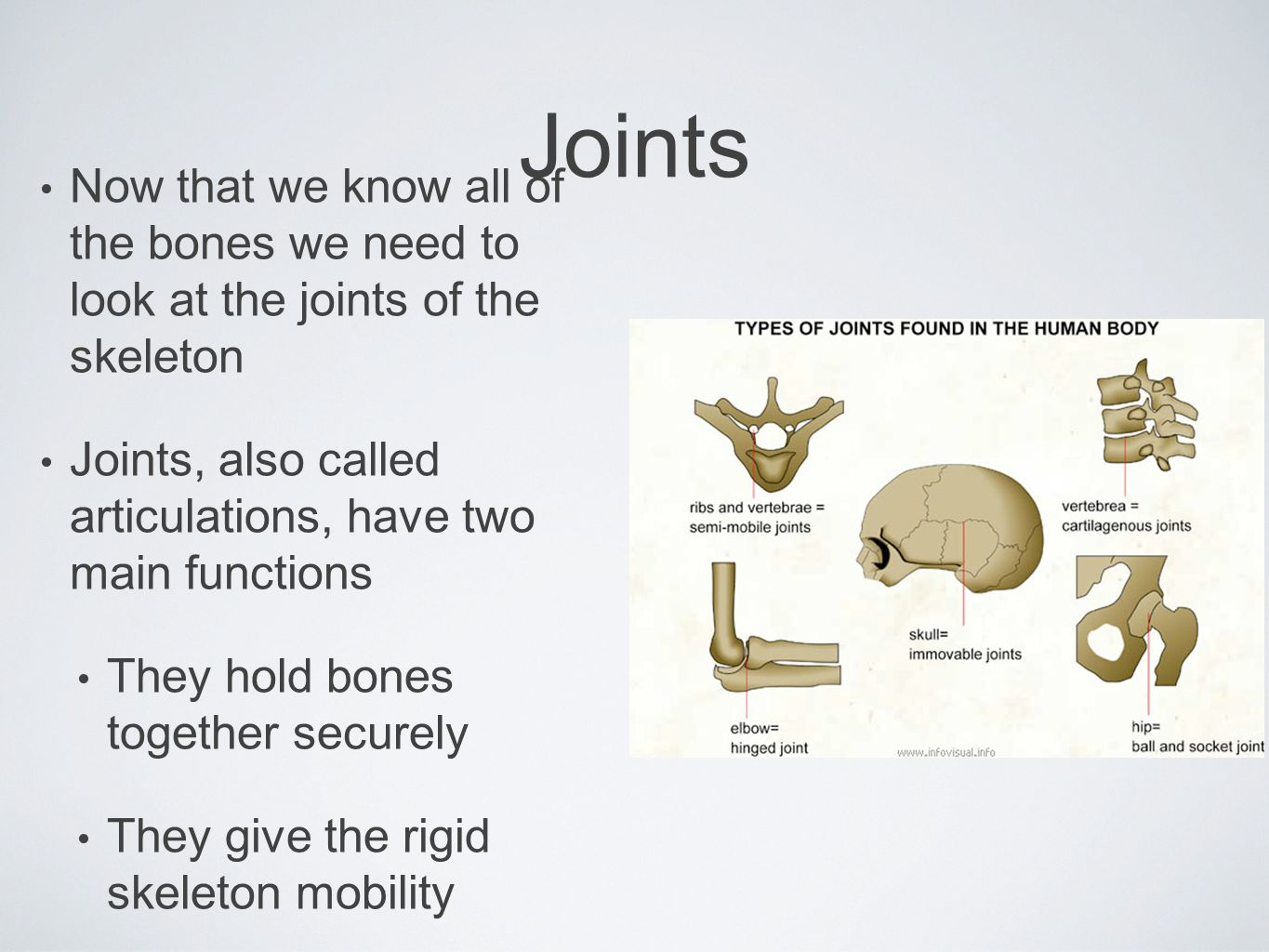 Now that we know all of the bones we need to look at the joints of the skeleton Joints, also called articulations, have two main functions They hold b