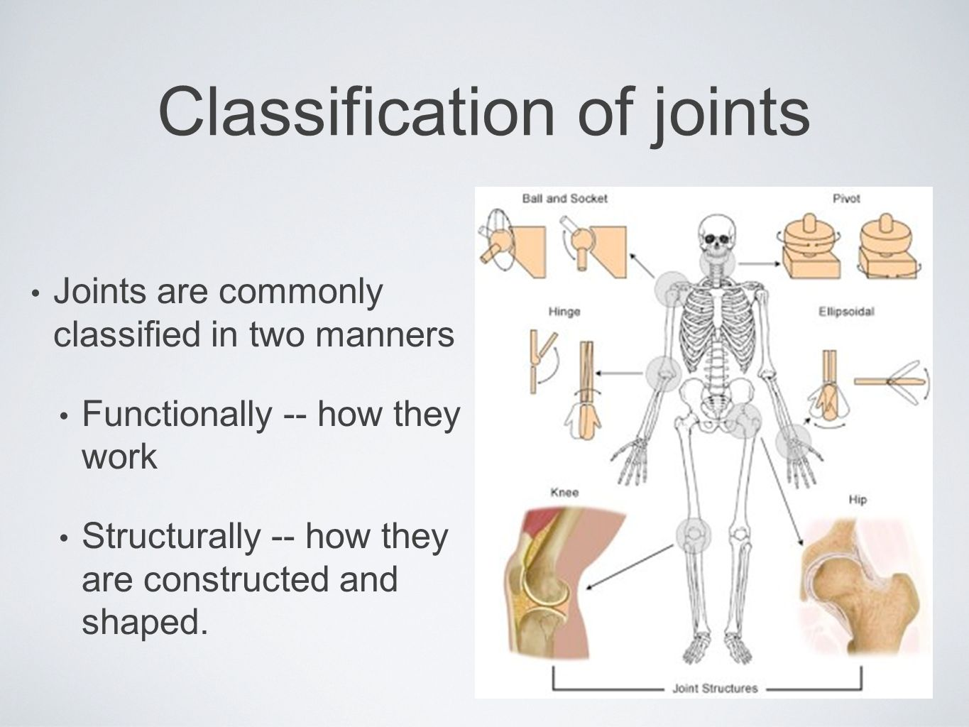 Classification of joints Joints are commonly classified in two manners Functionally -- how they work Structurally -- how they are constructed and shap