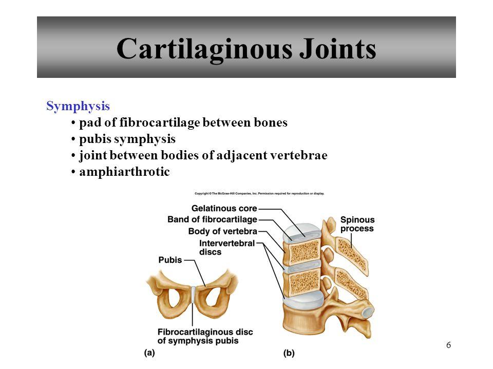 6 Cartilaginous Joints Symphysis pad of fibrocartilage between bones pubis symphysis joint between bodies of adjacent vertebrae amphiarthrotic