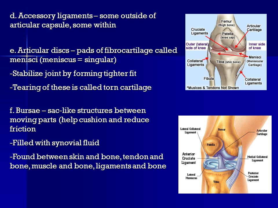 d.Accessory ligaments – some outside of articular capsule, some within e.