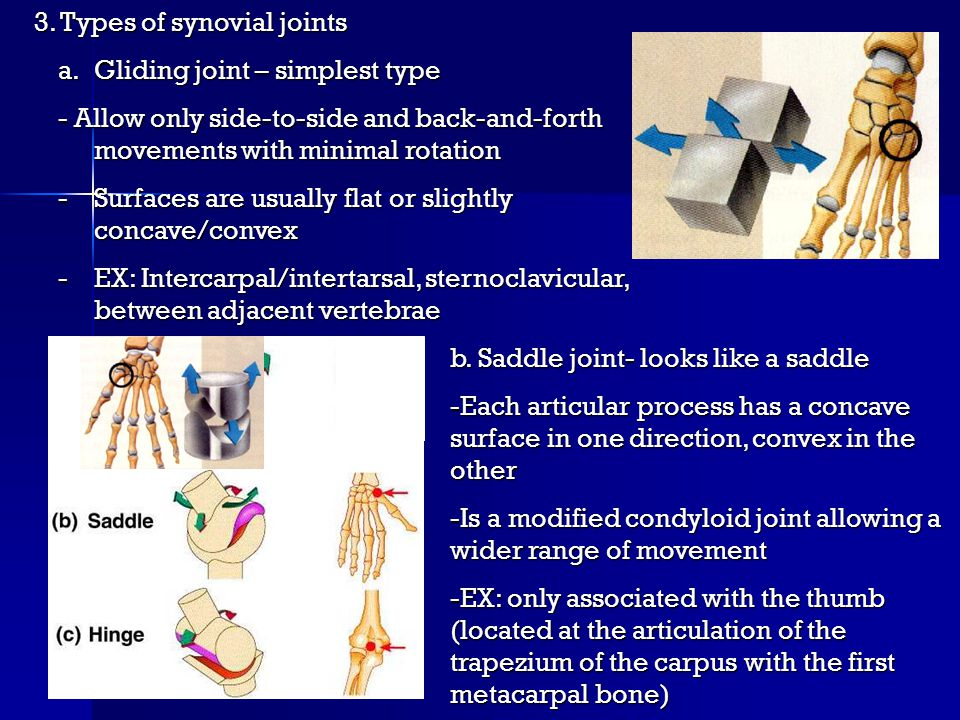 3. Types of synovial joints a.Gliding joint – simplest type - Allow only side-to-side and back-and-forth movements with minimal rotation -Surfaces are