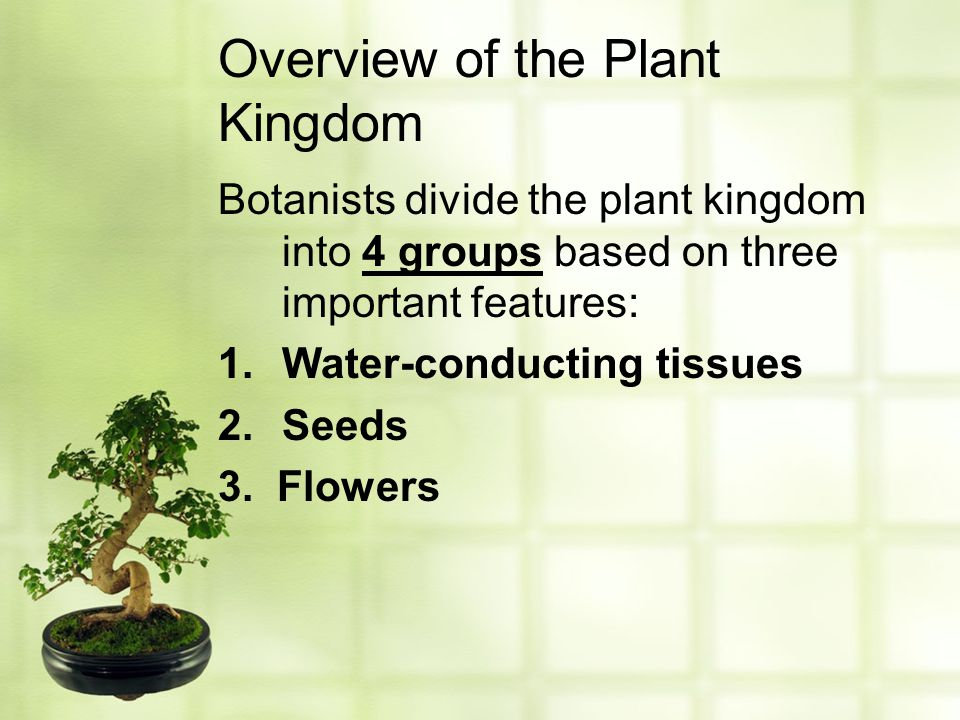 Overview of the Plant Kingdom Botanists divide the plant kingdom into 4 groups based on three important features: 1.Water-conducting tissues 2.Seeds 3