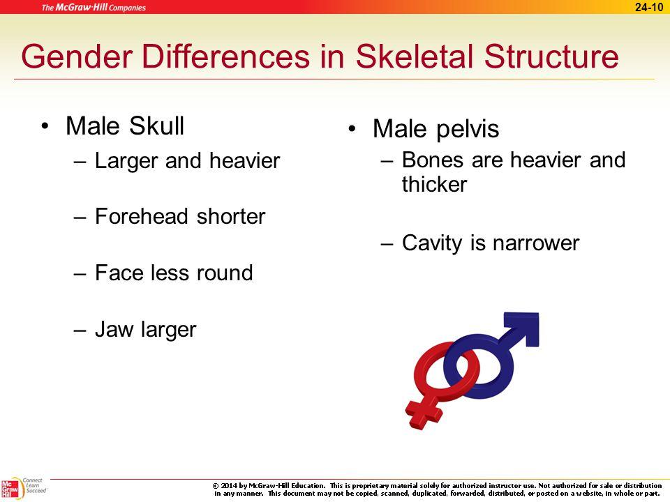 24-9 Bone Structure (cont.) Short bones Flat bones Irregular bones Sesamoid bones