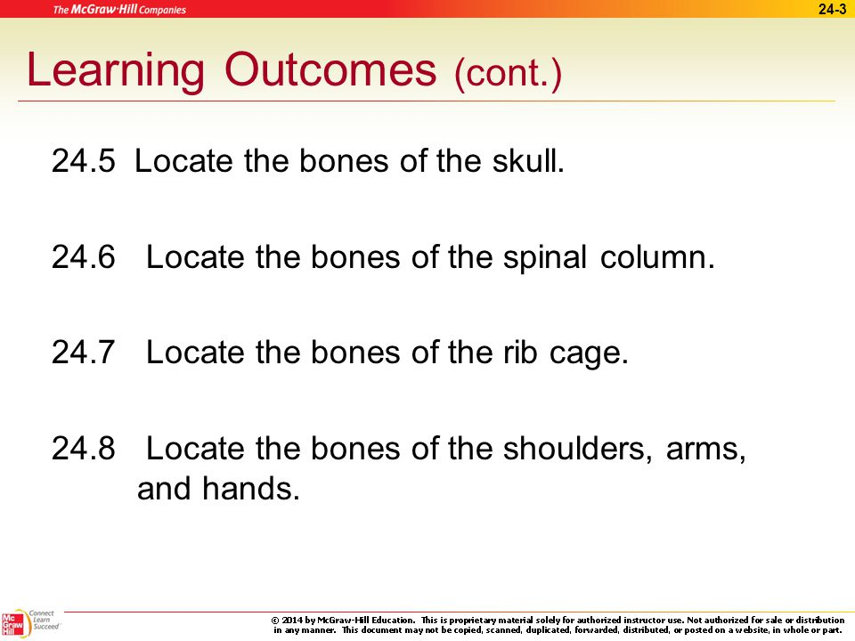 24-2 Learning Outcomes (cont.) 24.1 Describe the structure of bone tissue.
