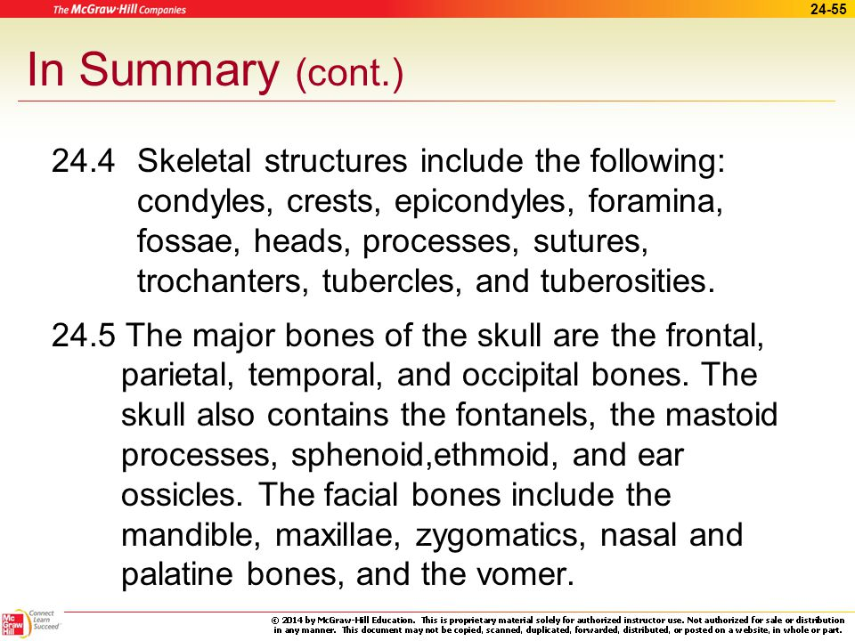 24-54 In Summary 24.2 Bone functions include giving shape to body parts, protecting soft structures of the body, and assisting in movement.