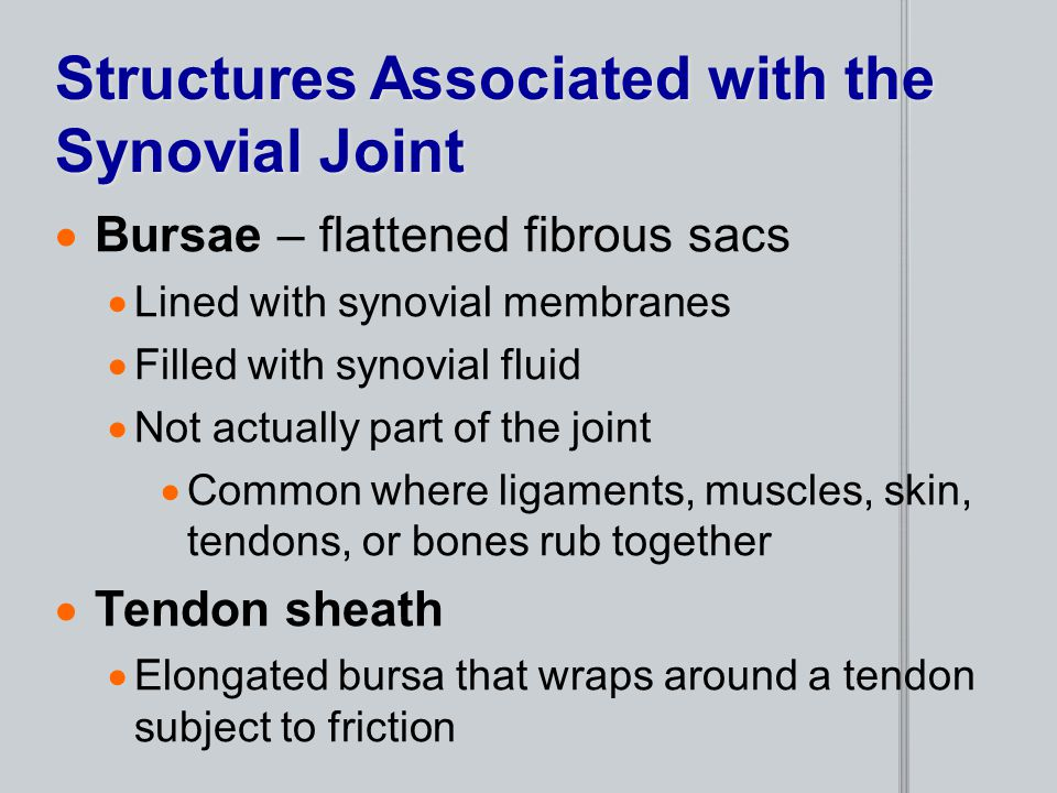 Structures Associated with the Synovial Joint  Bursae – flattened fibrous sacs  Lined with synovial membranes  Filled with synovial fluid  Not act