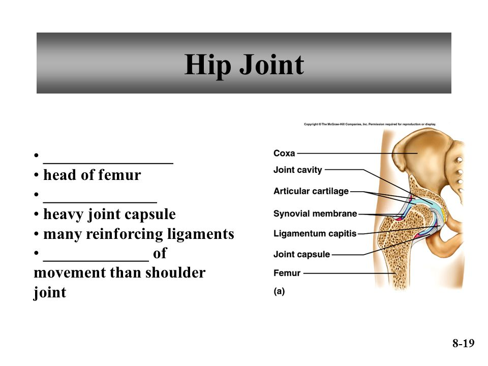 Hip Joint ________________ head of femur ______________ heavy joint capsule many reinforcing ligaments _____________ of movement than shoulder joint 8