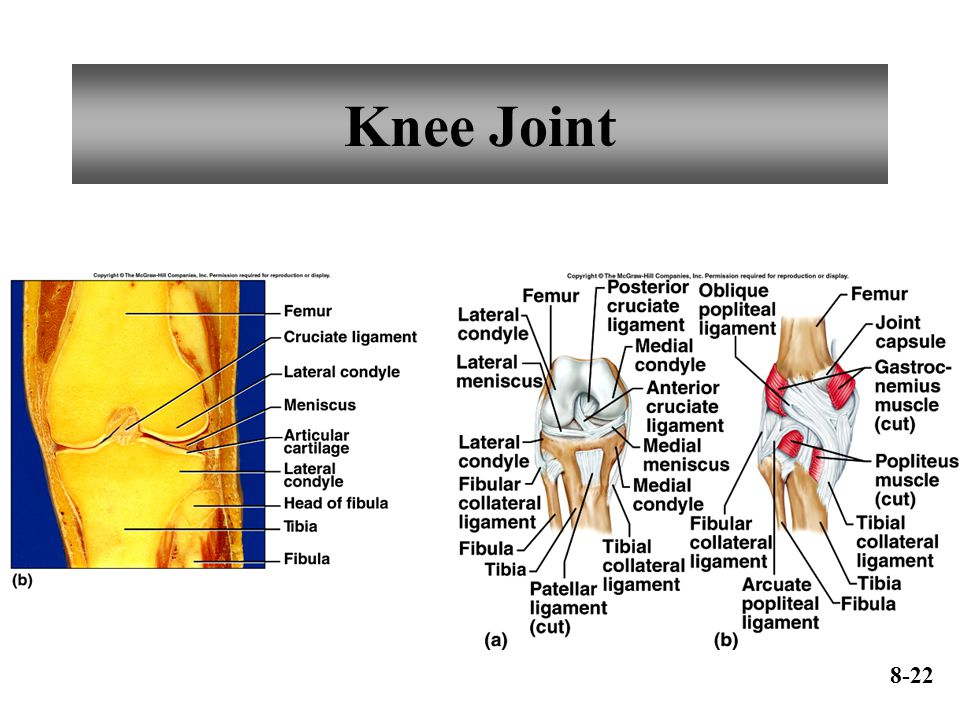 Knee Joint 8-22