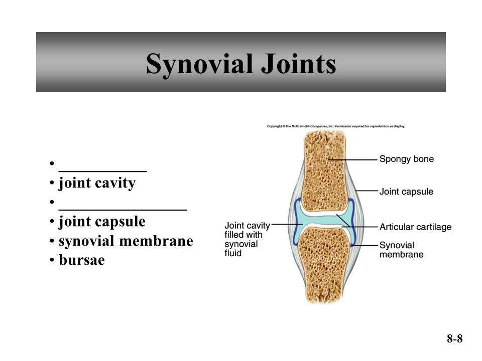 Synovial Joints ___________ joint cavity ________________ joint capsule synovial membrane bursae 8-8