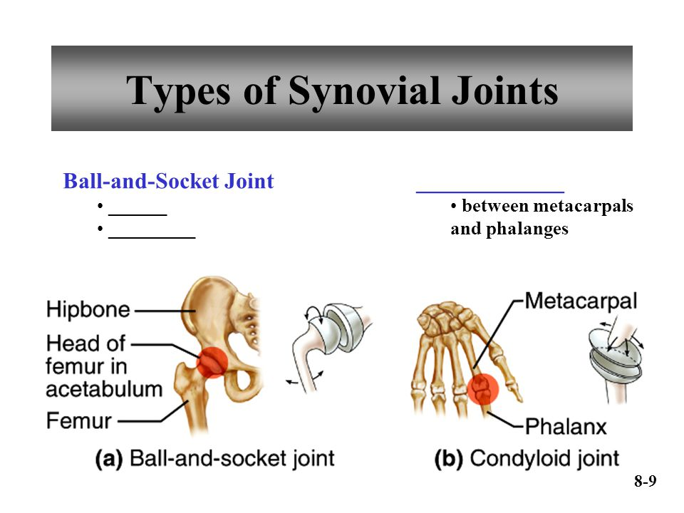 Types of Synovial Joints Ball-and-Socket Joint ______ _________ _____________ between metacarpals and phalanges 8-9