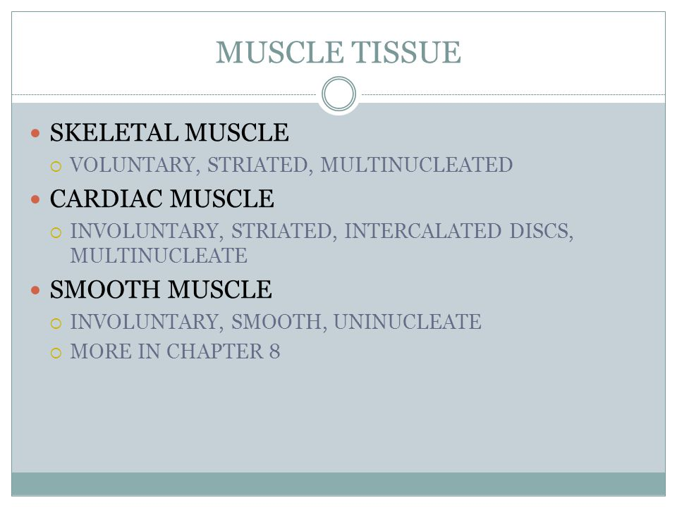 MUSCLE TISSUE SKELETAL MUSCLE  VOLUNTARY, STRIATED, MULTINUCLEATED CARDIAC MUSCLE  INVOLUNTARY, STRIATED, INTERCALATED DISCS, MULTINUCLEATE SMOOTH MUSCLE  INVOLUNTARY, SMOOTH, UNINUCLEATE  MORE IN CHAPTER 8